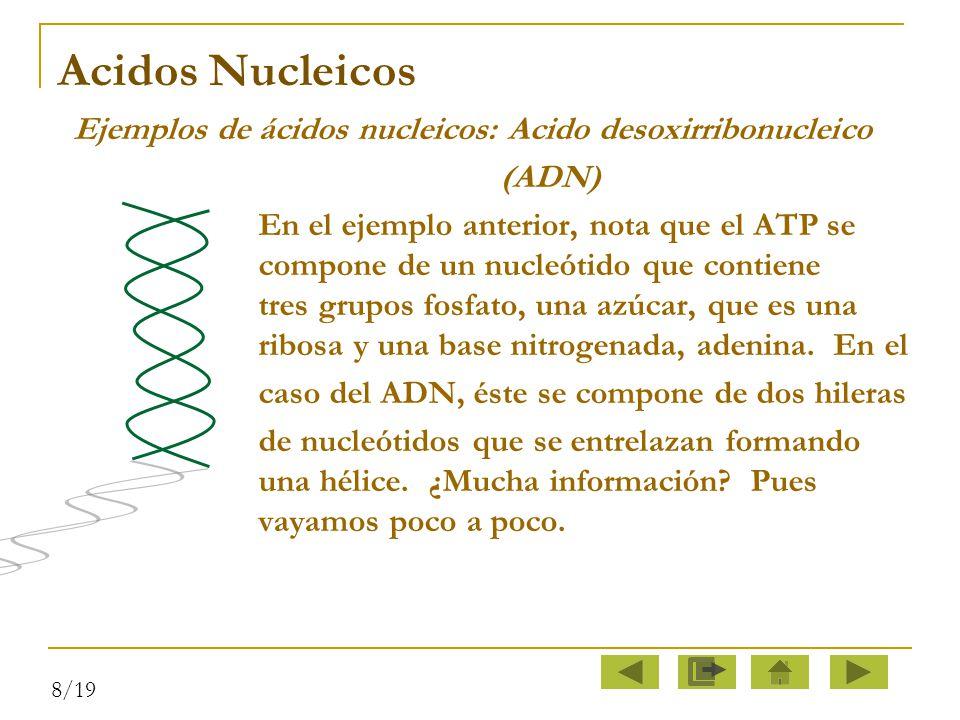 Acidos Nucleicos (ADN)