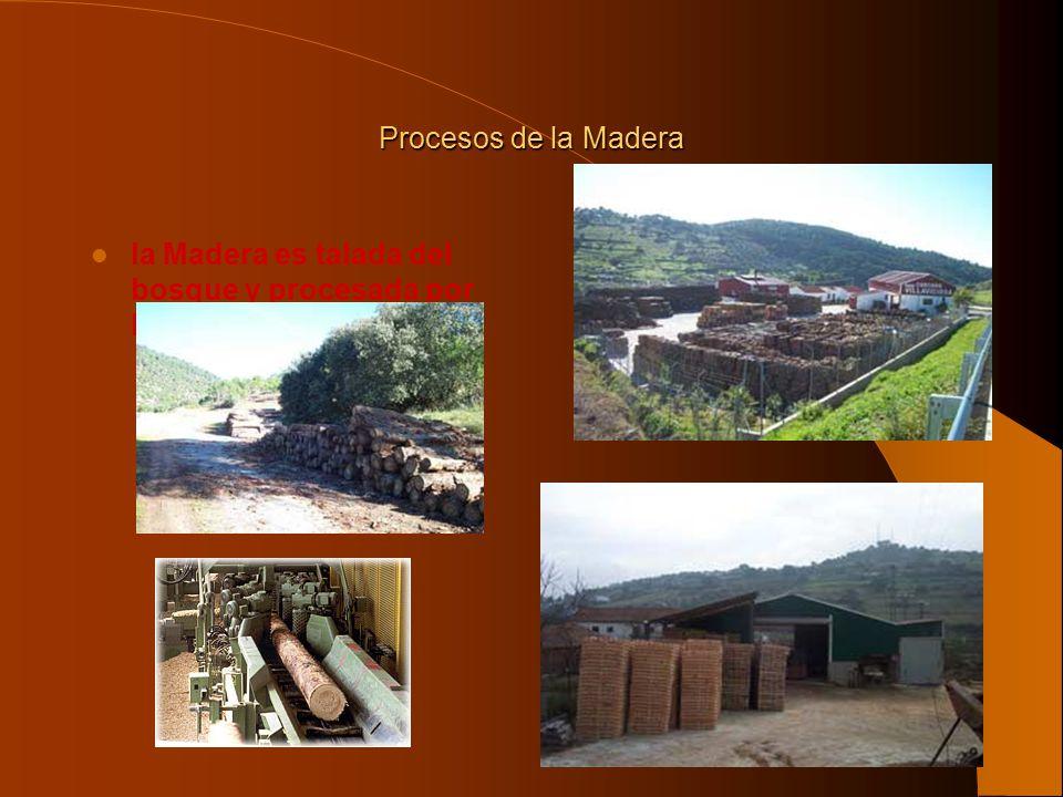 Procesos de la Madera la Madera es talada del bosque y procesada por los aserraderos.