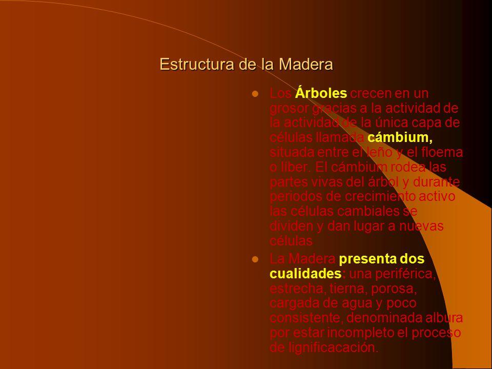 Estructura de la Madera