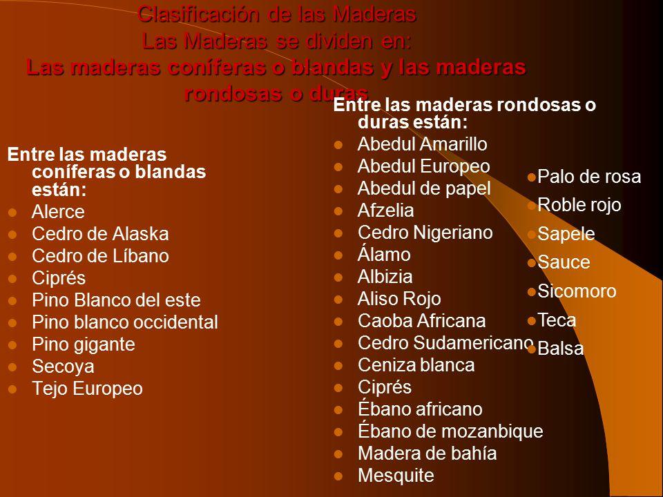 Clasificación de las Maderas Las Maderas se dividen en: Las maderas coníferas o blandas y las maderas rondosas o duras