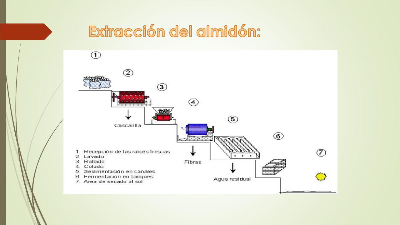 Extracción del almidón: