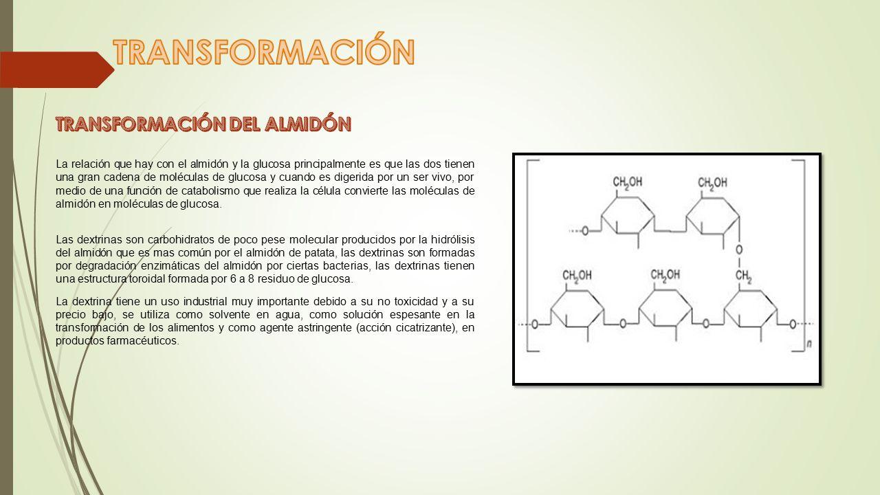 TRANSFORMACIÓN TRANSFORMACIÓN DEL ALMIDÓN