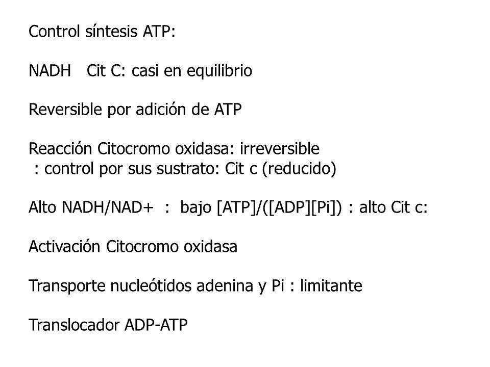 Control síntesis ATP:NADH Cit C: casi en equilibrio. Reversible por adición de ATP. Reacción Citocromo oxidasa: irreversible.