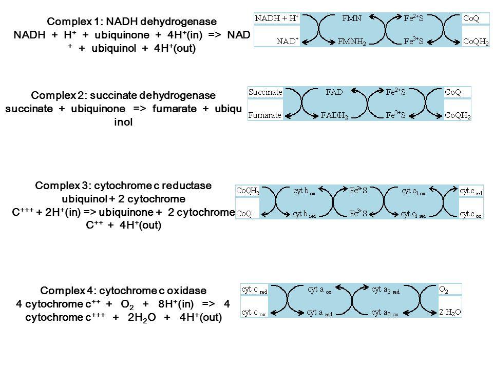 Complex 1: NADH dehydrogenase