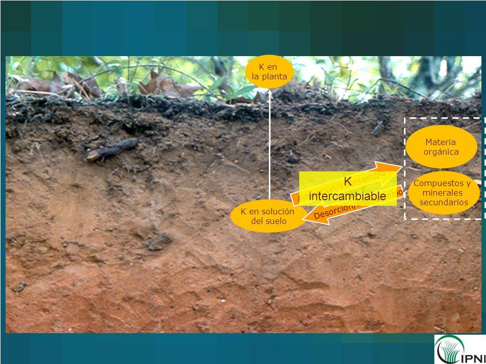 K intercambiable K en la planta Materia orgánica Adsorción/intercambio