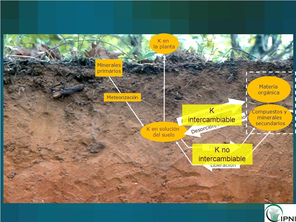 K intercambiable K no intercambiable K en la planta Minerales