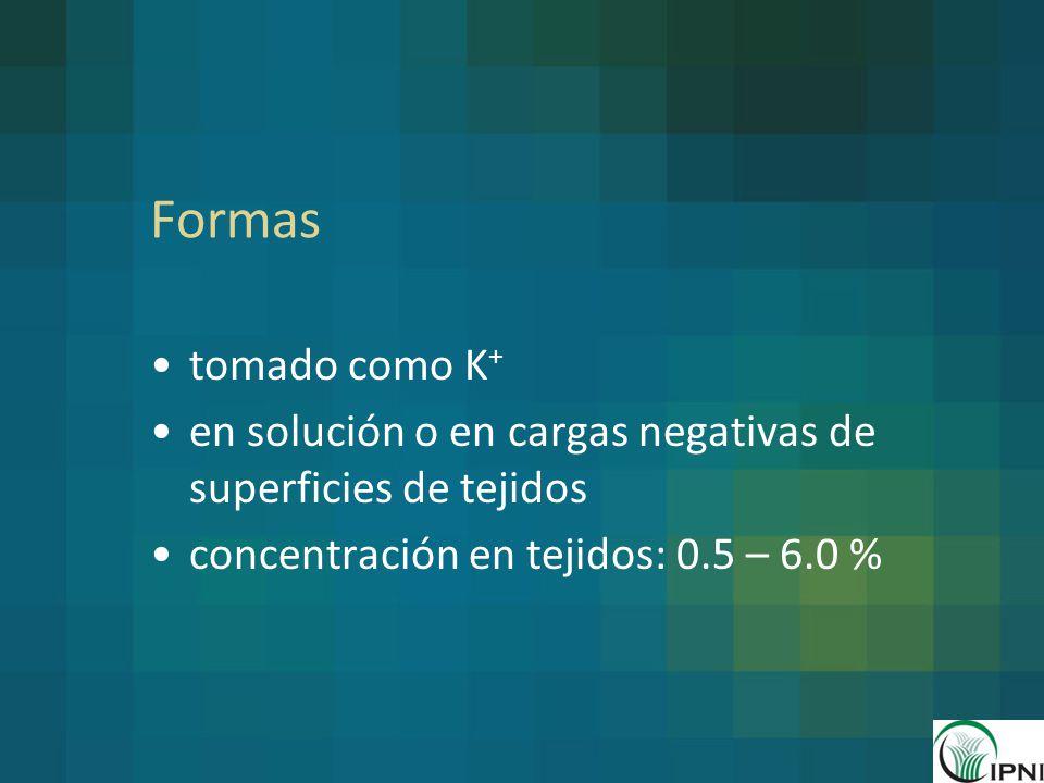 Formas tomado como K+ en solución o en cargas negativas de superficies de tejidos. concentración en tejidos: 0.5 – 6.0 %