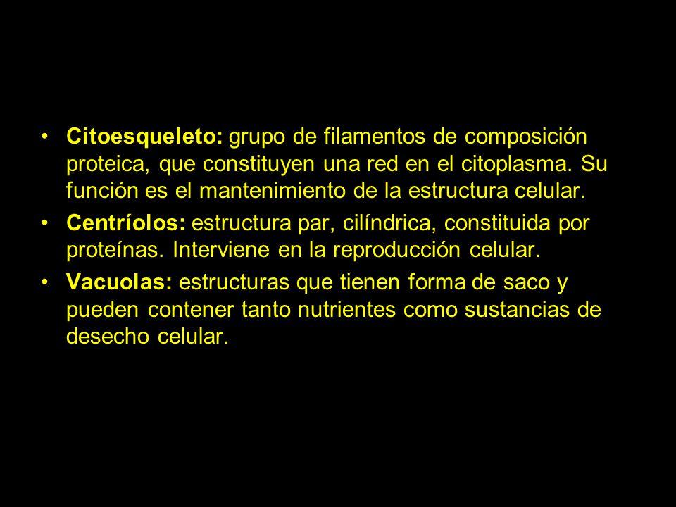 Citoesqueleto: grupo de filamentos de composición proteica, que constituyen una red en el citoplasma. Su función es el mantenimiento de la estructura celular.
