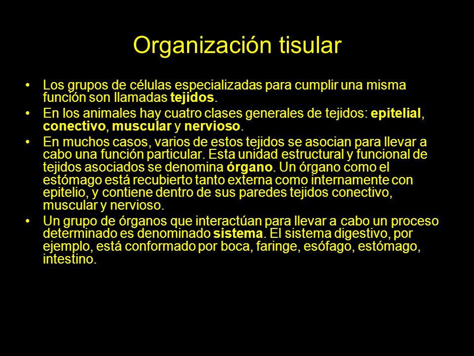 Organización tisular Los grupos de células especializadas para cumplir una misma función son llamadas tejidos.