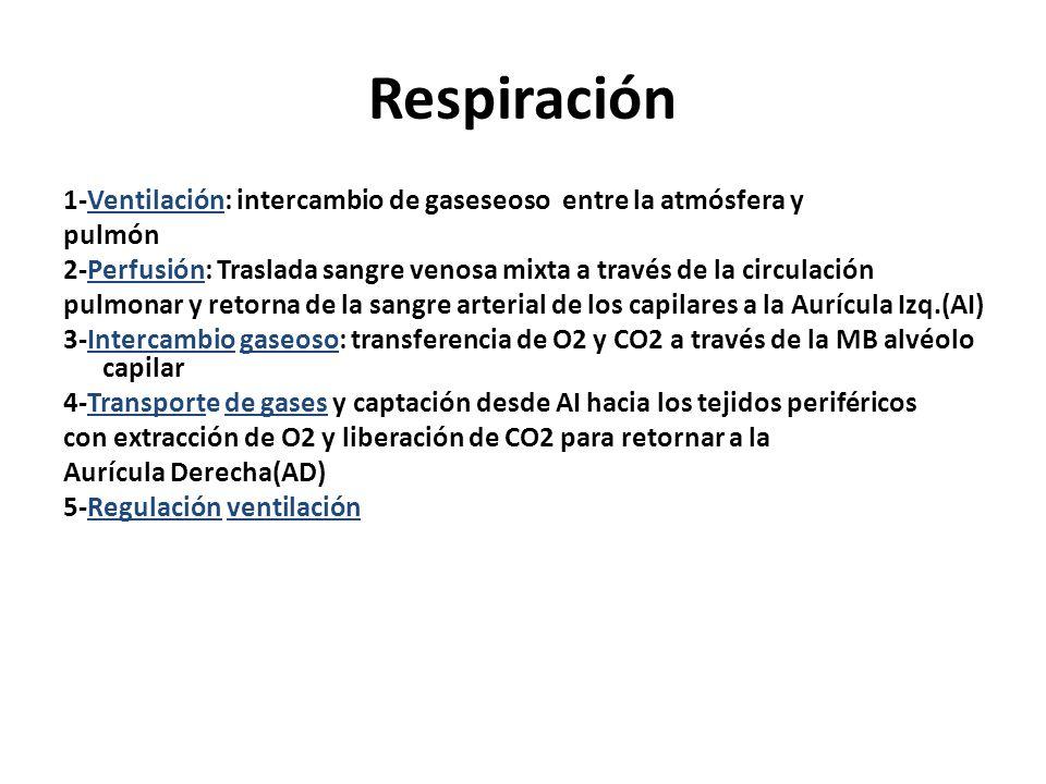 Respiración 1-Ventilación: intercambio de gaseseoso entre la atmósfera y. pulmón.