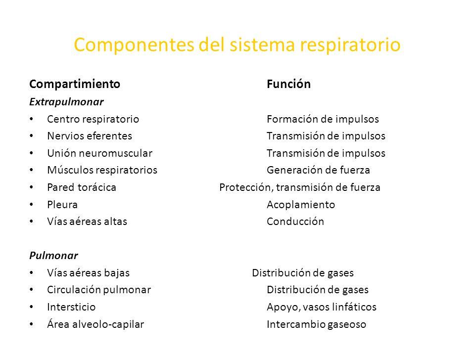 Componentes del sistema respiratorio