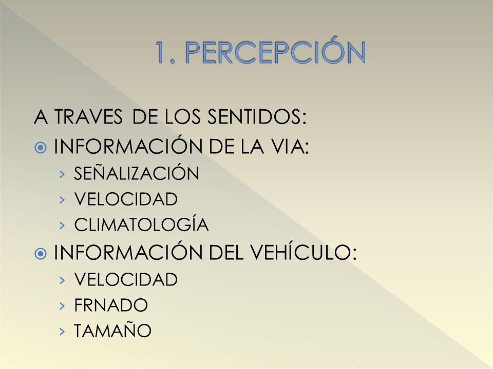 1. PERCEPCIÓN A TRAVES DE LOS SENTIDOS: INFORMACIÓN DE LA VIA: