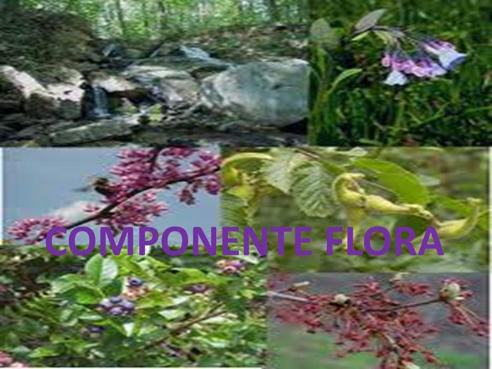 COMPONENTE FLORA