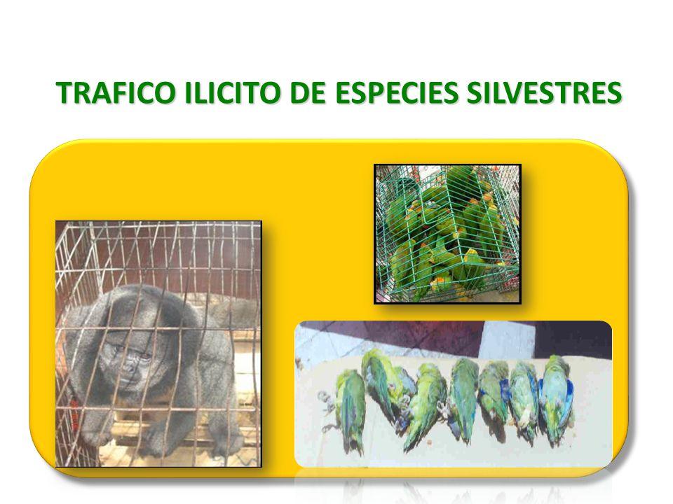 TRAFICO ILICITO DE ESPECIES SILVESTRES