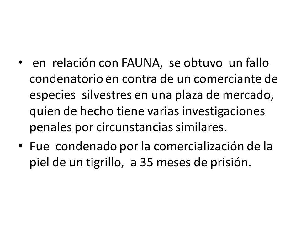 en relación con FAUNA, se obtuvo un fallo condenatorio en contra de un comerciante de especies silvestres en una plaza de mercado, quien de hecho tiene varias investigaciones penales por circunstancias similares.