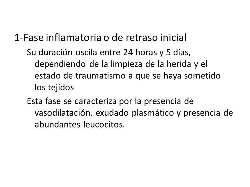 CICATRIZACION 1-Fase inflamatoria o de retraso inicial