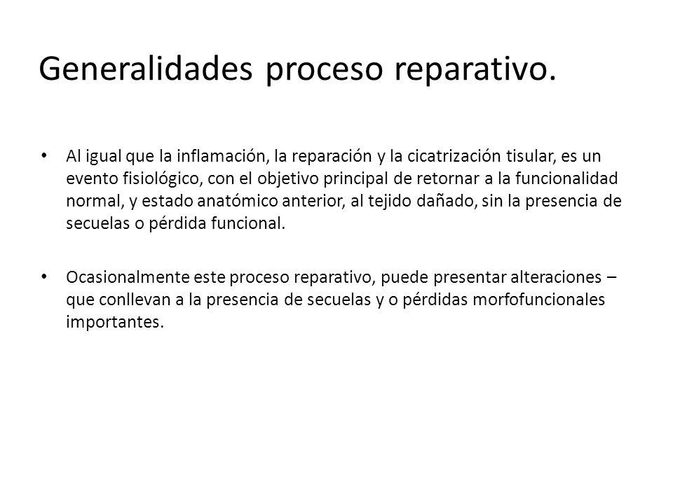 Generalidades proceso reparativo.