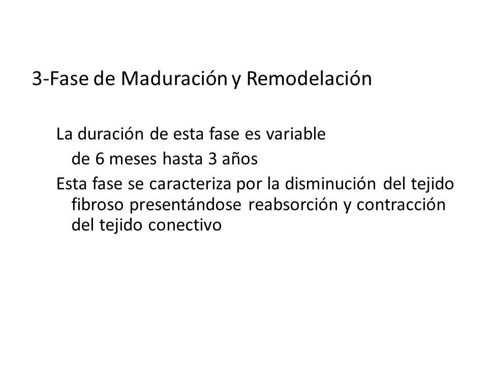 CICATRIZACION 3-Fase de Maduración y Remodelación