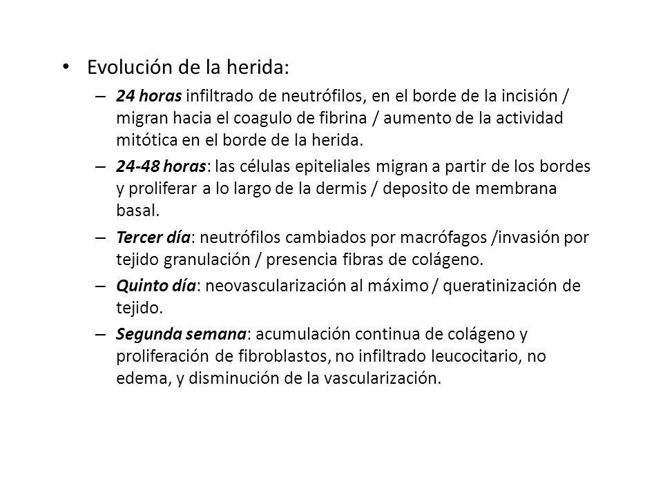 Evolución de la herida: