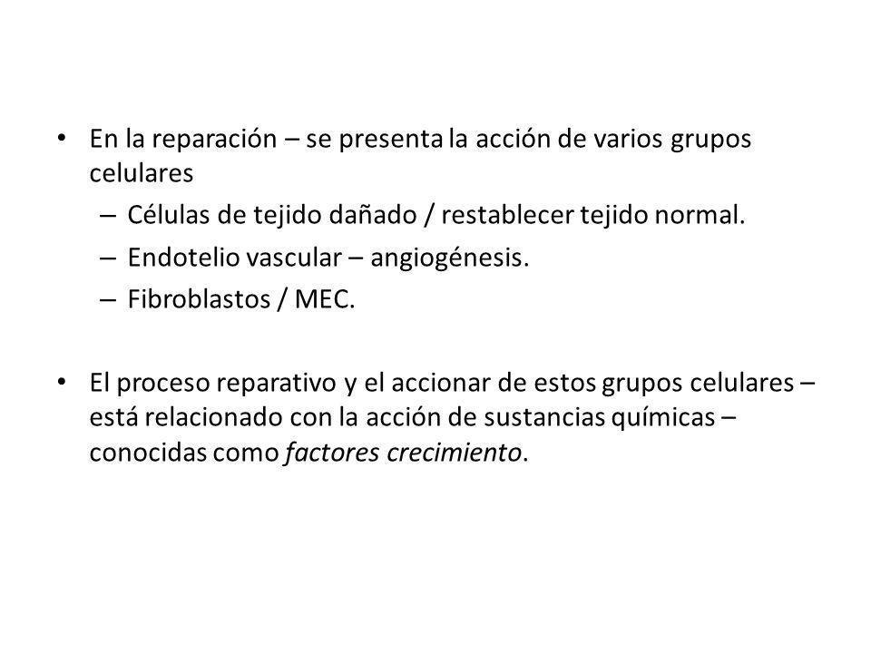 En la reparación – se presenta la acción de varios grupos celulares