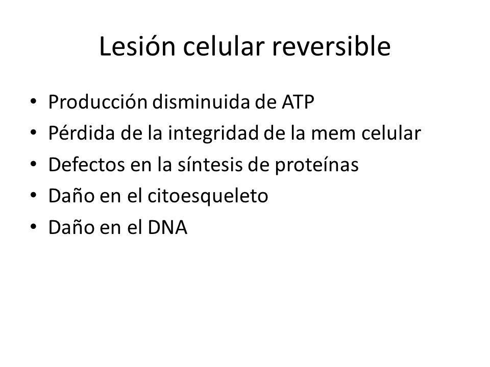 Lesión celular reversible