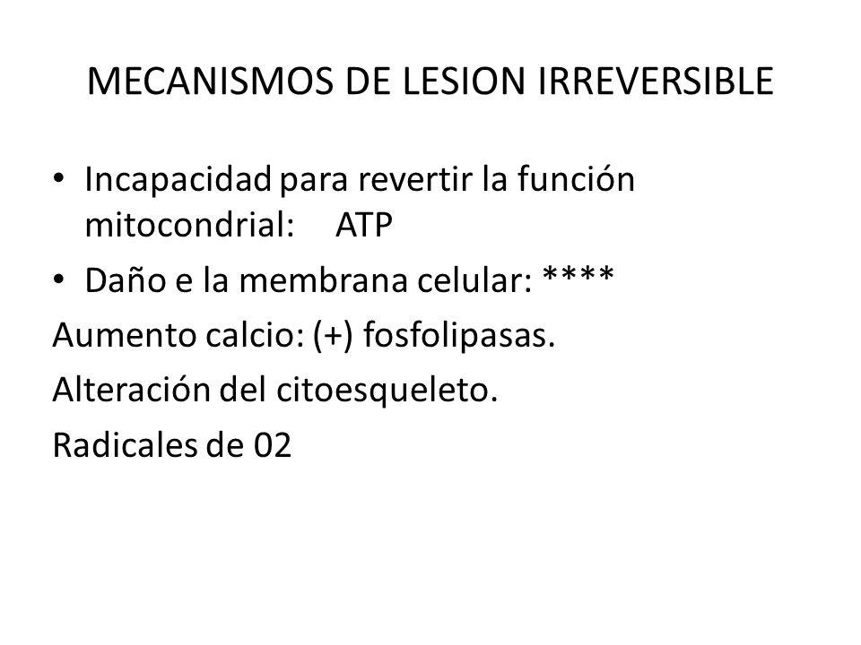 MECANISMOS DE LESION IRREVERSIBLE