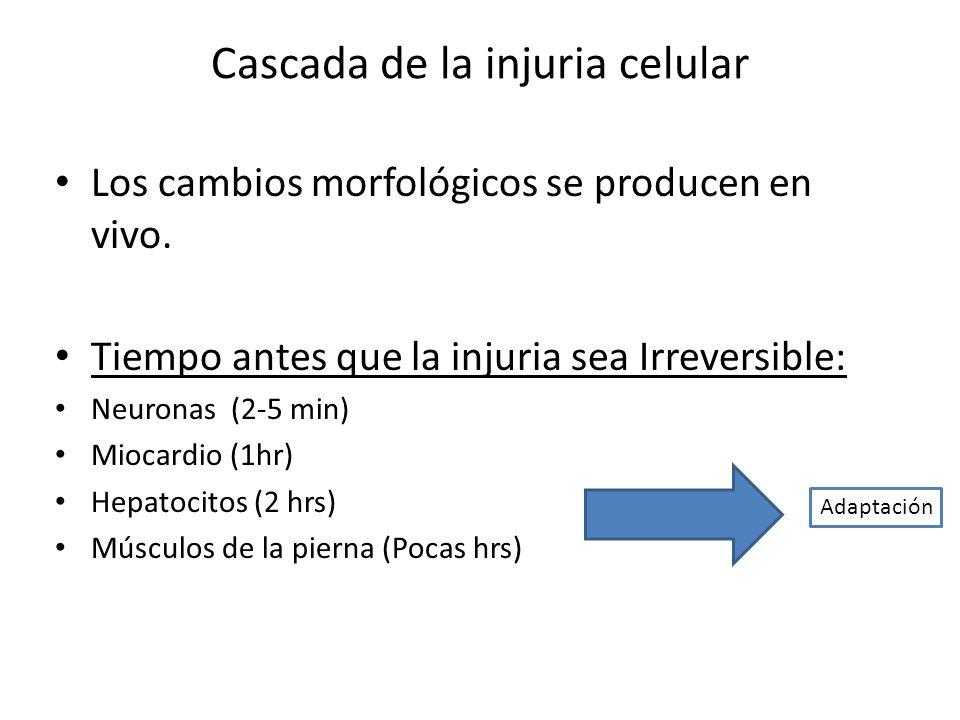 Cascada de la injuria celular