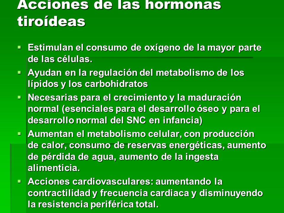 Acciones de las hormonas tiroídeas