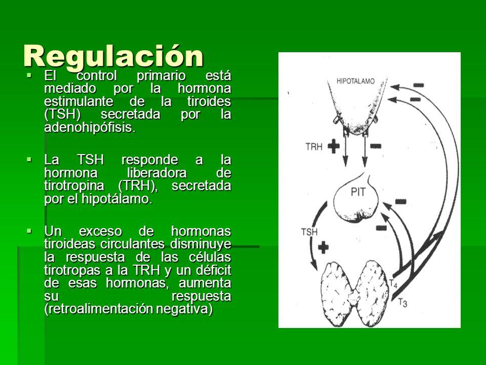 Regulación El control primario está mediado por la hormona estimulante de la tiroides (TSH) secretada por la adenohipófisis.