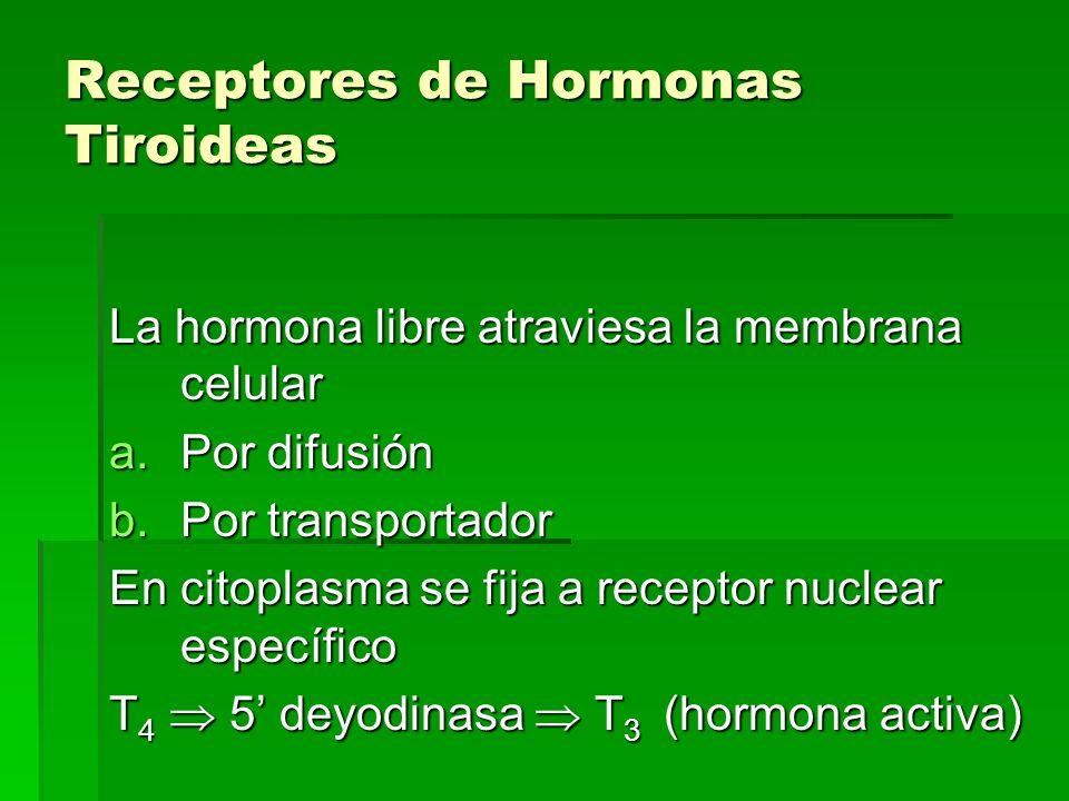 Receptores de Hormonas Tiroideas