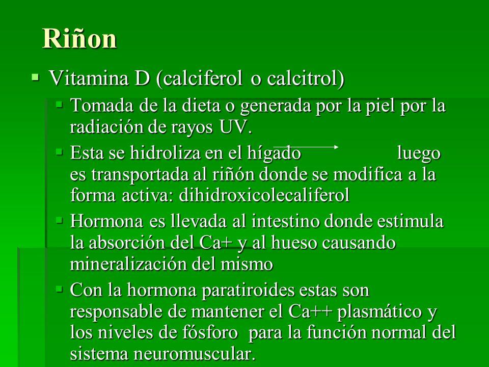 Riñon Vitamina D (calciferol o calcitrol)