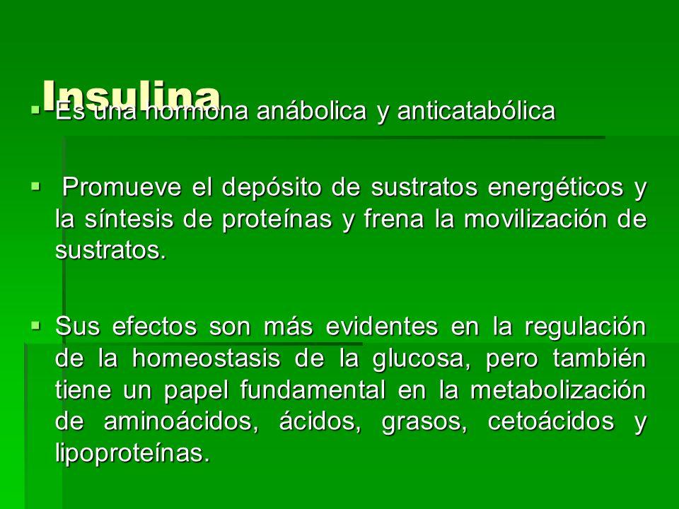Insulina Es una hormona anábolica y anticatabólica
