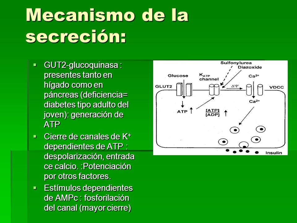 Mecanismo de la secreción: