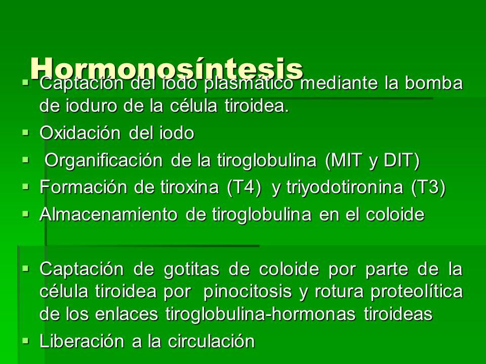 Hormonosíntesis Captación del iodo plasmático mediante la bomba de ioduro de la célula tiroidea. Oxidación del iodo.