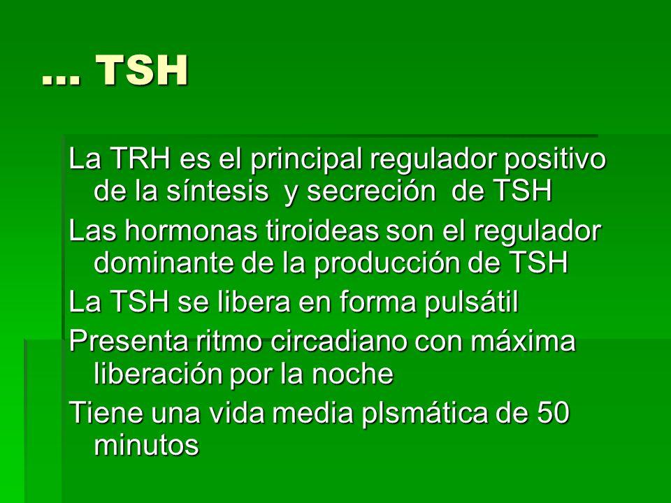 … TSH La TRH es el principal regulador positivo de la síntesis y secreción de TSH.