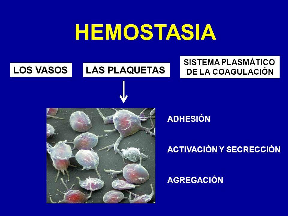 HEMOSTASIA LOS VASOS LAS PLAQUETAS SISTEMA PLASMÁTICO