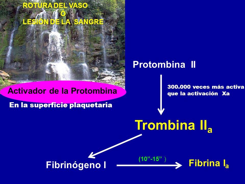 Activador de la Protombina