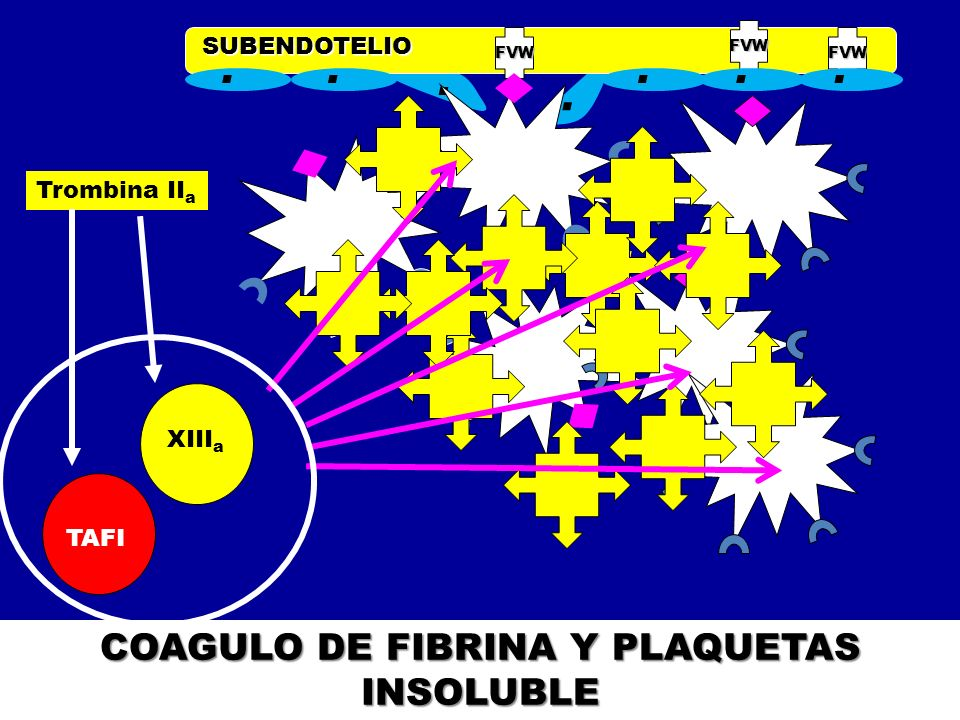 COAGULO DE FIBRINA Y PLAQUETAS