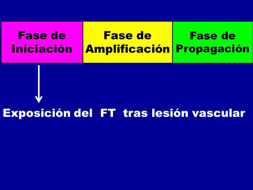 Exposición del FT tras lesión vascular