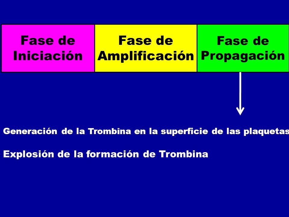 Fase de Iniciación Fase de Amplificación Fase de Propagación