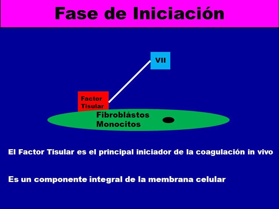 Fase de Iniciación Fibroblástos Monocitos