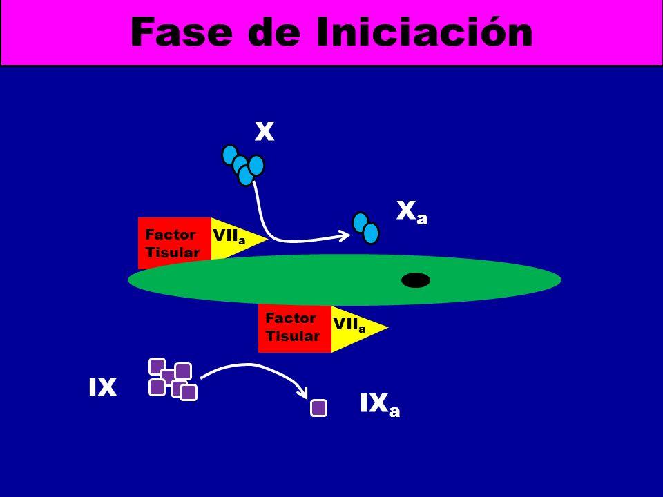 Fase de Iniciación X Xa Factor Tisular VIIa Factor Tisular VIIa IX IXa