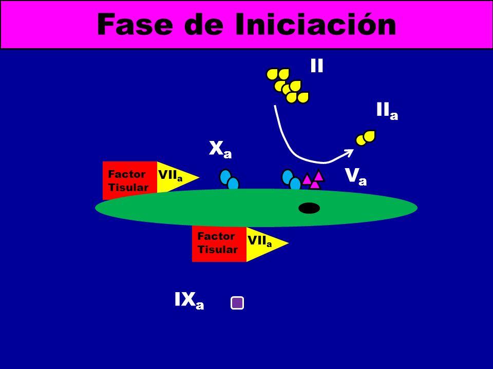 Fase de Iniciación II IIa Xa Va IXa VIIa VIIa Factor Tisular Factor