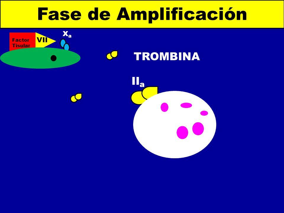 Fase de Amplificación Factor Tisular VIIa Xa TROMBINA IIa