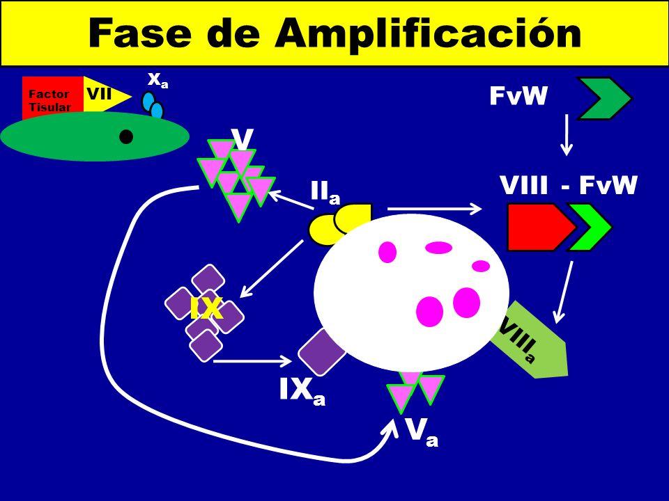 Fase de Amplificación V IX IXa Va FvW VIII - FvW IIa VIIIa Xa VIIa