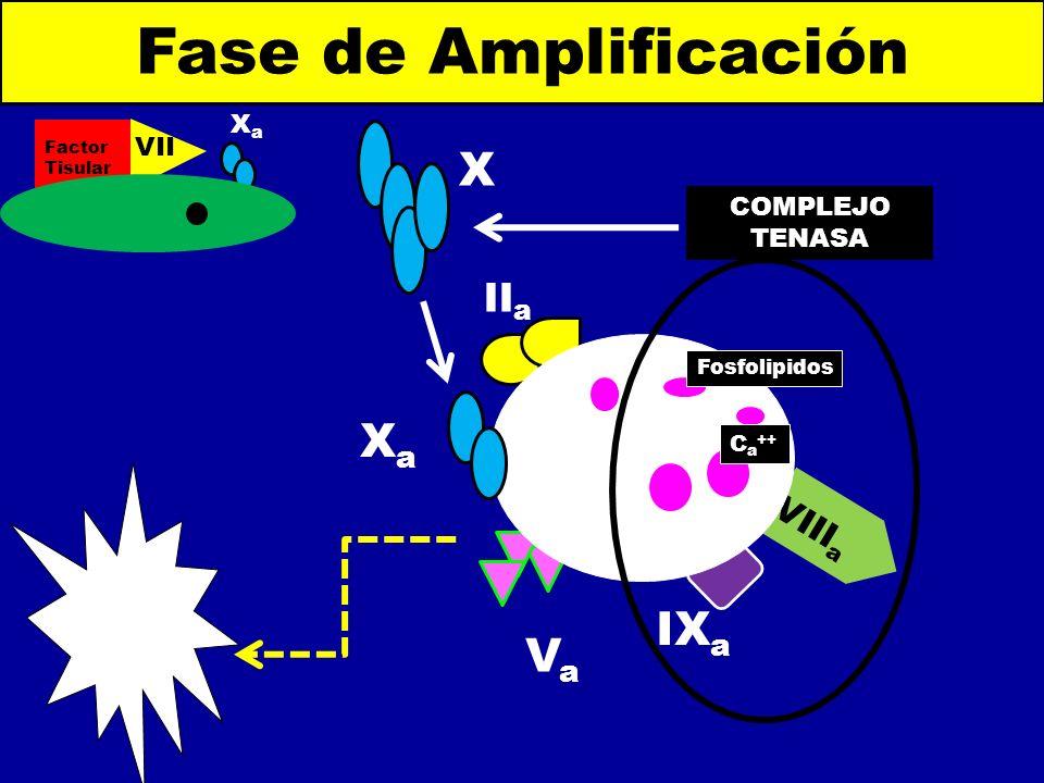 Fase de Amplificación X Xa IXa Va IIa VIIIa Xa VIIa COMPLEJO TENASA