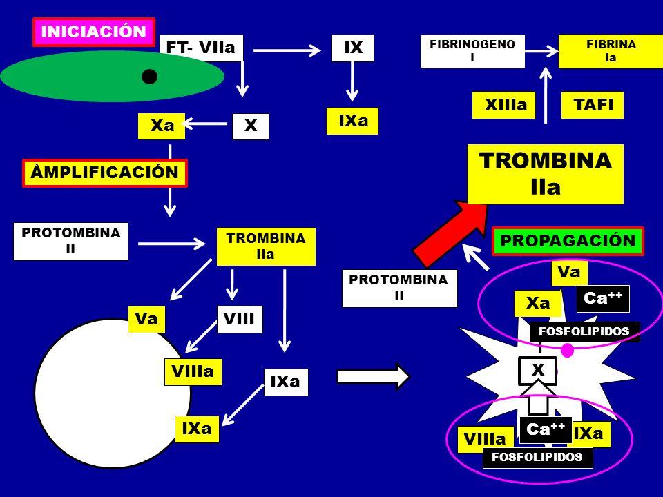 TROMBINA IIa INICIACIÓN FT- VIIa IX XIIIa TAFI IXa Xa X ÀMPLIFICACIÓN