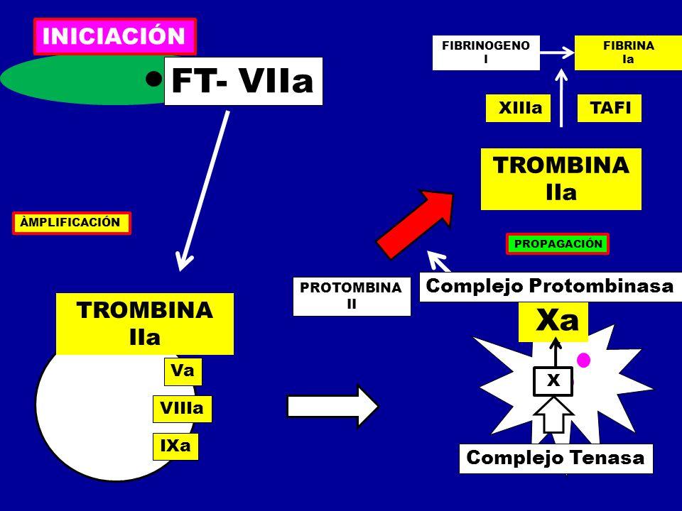 FT- VIIa Xa INICIACIÓN TROMBINA IIa TROMBINA IIa Complejo Protombinasa