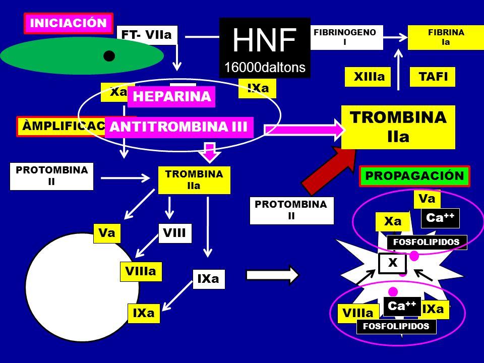 HNF TROMBINA IIa 16000daltons HEPARINA ANTITROMBINA III INICIACIÓN