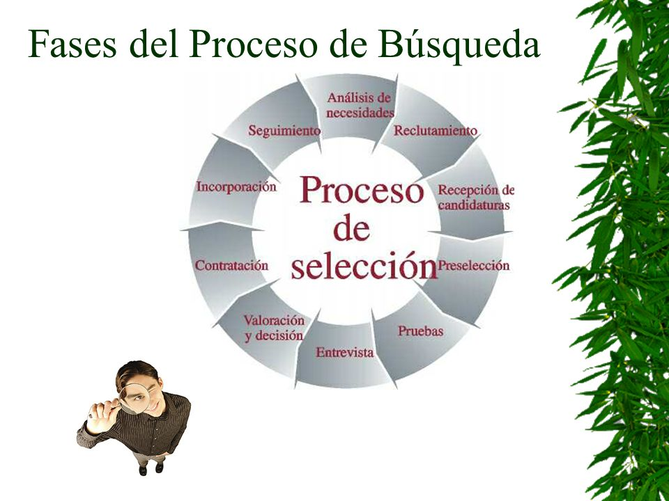 Fases del Proceso de Búsqueda